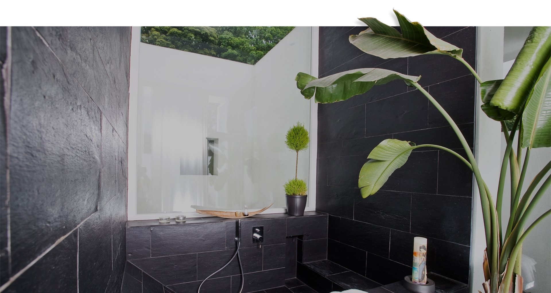 Badewanne mit Pflanze
