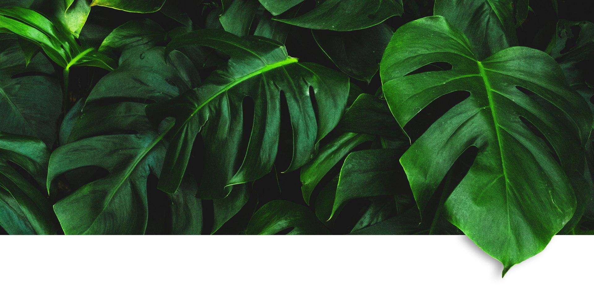 Pflanzen Hintergrund